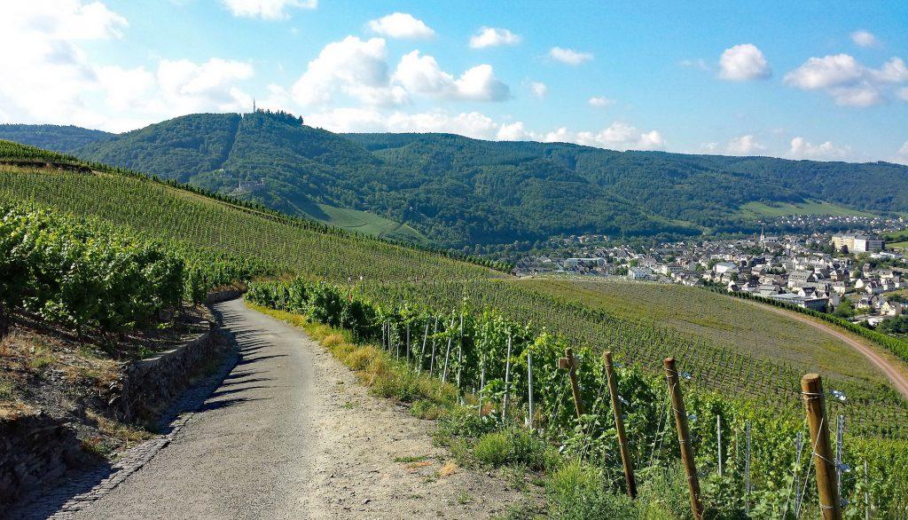 Wandern in den Weinbergen rund um Bernkastel-Kues